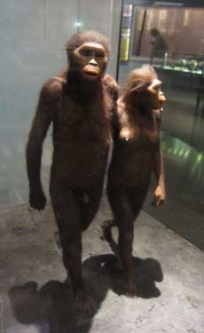 """Lucy,"" Australopithecus afarensis reconstruction by Gary Sawyer at the Hall of Human Origins, American Museum of Natural History, NYC"